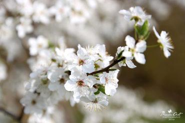 Fehér virágok